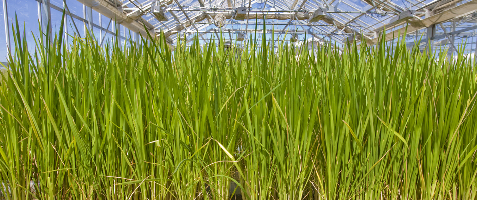 Non Ethanol Gas >> Turning Grass into Gas for Less